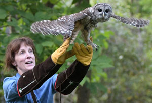 Sue releases Barred Owl