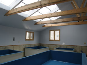 Walls & skylight painted, pools in place (February)